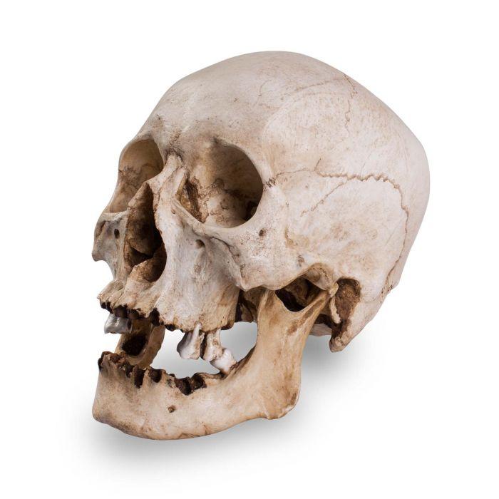 Skull Shoppe - Crâne d'Homme Adulte Asiatique Âgé