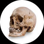 Crânes de Référence par Skull Shoppe